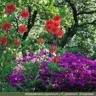 botanico24